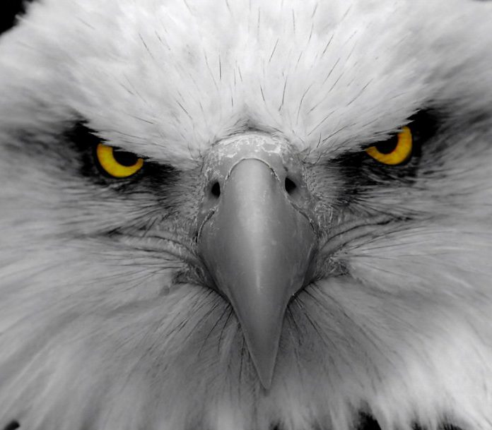 cropped-eagle-eyes-1280x9602.jpg